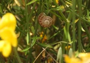 Garden bugs 39 238