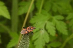 Garden bugs 39 239