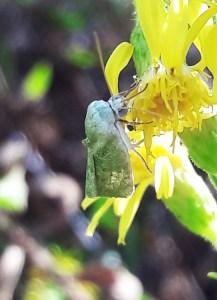 Garden bugs 53