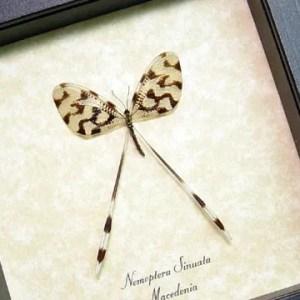 Antlions & Threadwings
