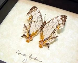 Cyrestis thyodamus Road Map Butterfly
