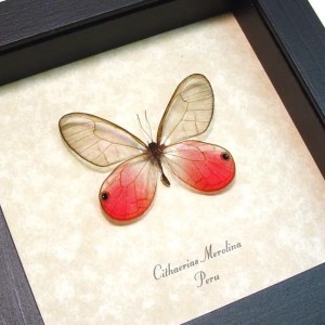 Pink Butterflies Insects