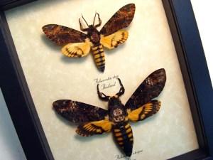 Death Head Moth Set Acherontia atropos styx