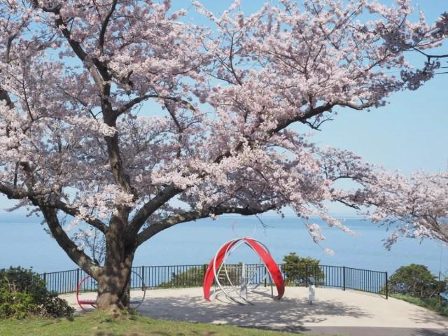 2017 桜2