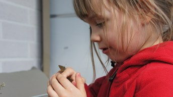 Sienna taking a close look at a White-letter Hairstreak