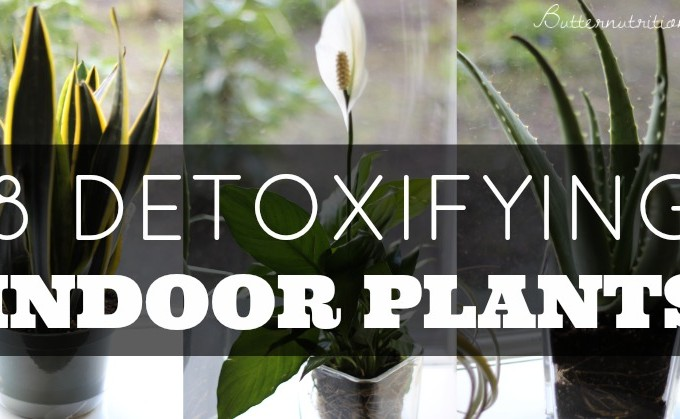 8 Detoxifying Indoor Plants | Butter Nutrition