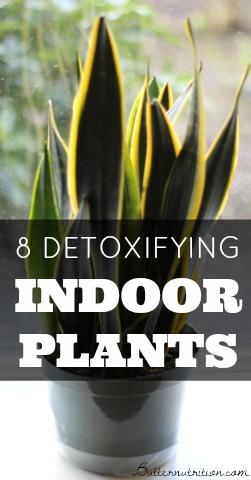 8 Detoxifying Indoor Plants   Butter Nutrition