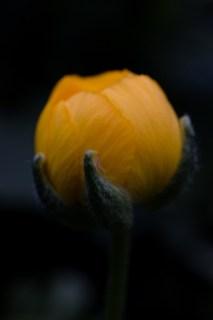 12von12, Juni 2018, Blumen, Bild 09