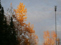 Late afternoon sun on the trees in our yard.