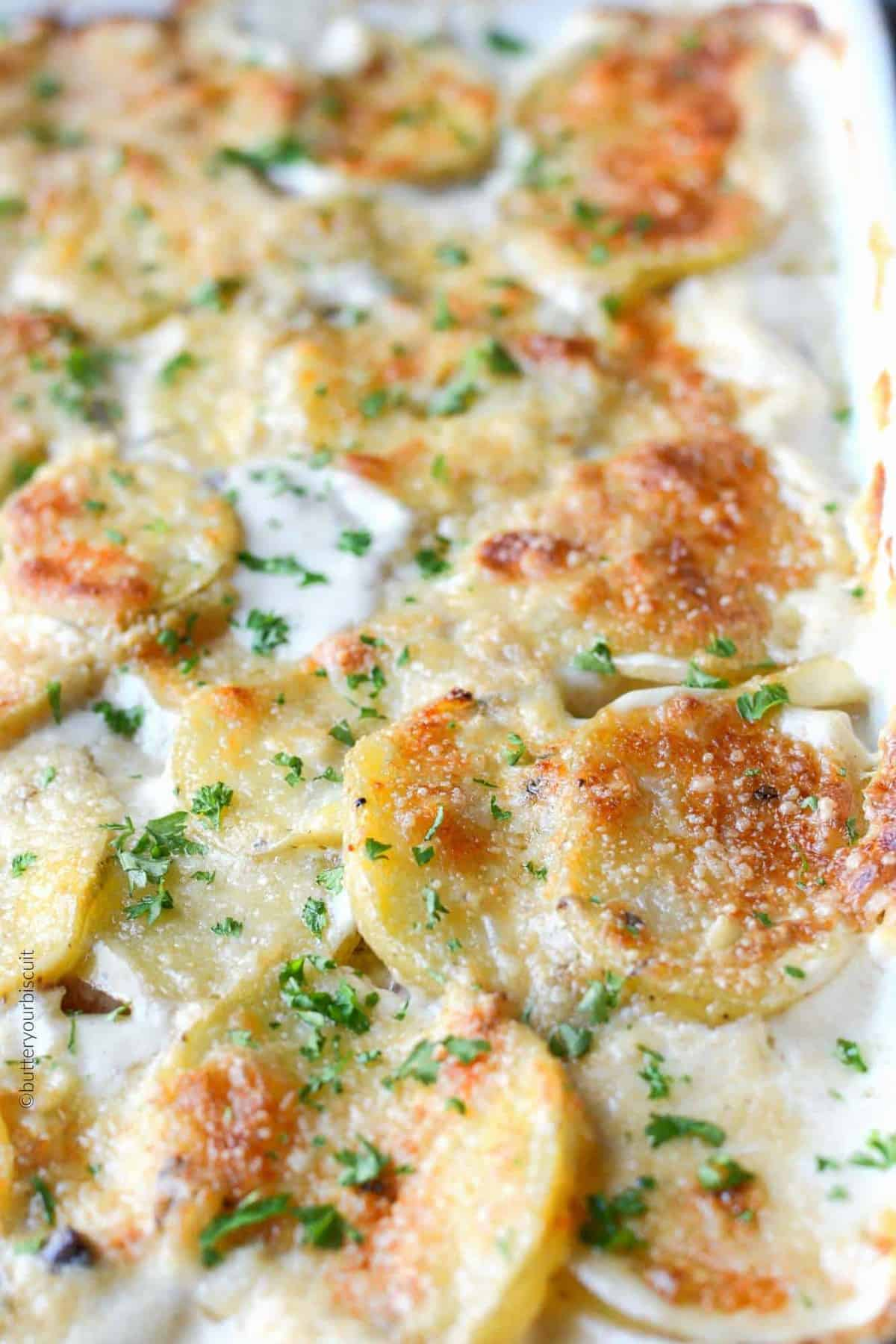 Parmesan Scalloped potatoes and ham in a baking dish