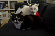 Cats - Mr B (Arnold) and Penny