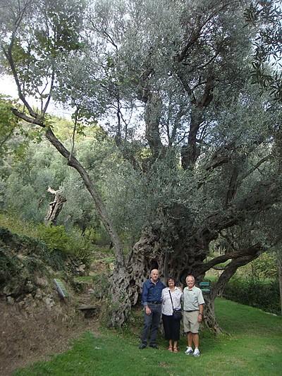 Bračni par Sargent sa Vladom Duletićem ispred Velje masline u Ivanovićima kod Budve