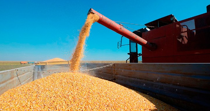 Gobierno dejará sin efecto el límite de 30.000 toneladas diarias para exportar maíz