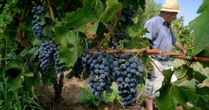Argentina volverá a exportar uva a Brasil: se prevé ingresos por 20 millones de dólares