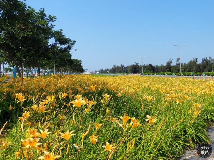 <台中梧棲> 海線追金針花去,一片盛開的金針花,金色花海就在台中港旅客服務中心前~
