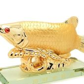Golden Arowana with Coin to attract Wealth