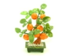Jade Feng Shui Good Fortune Lime Plant