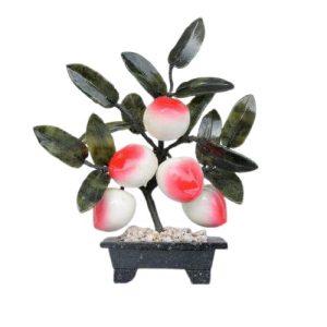 Peach Plant for Longetivity-