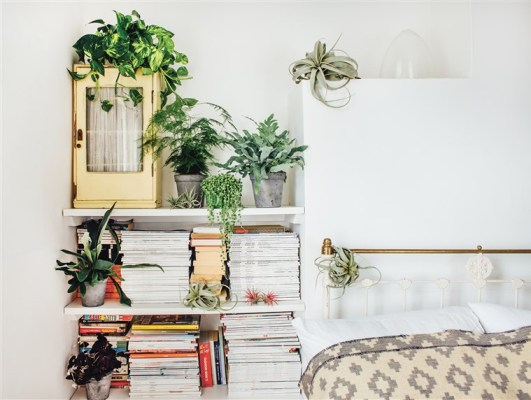 plants-in-bedroom