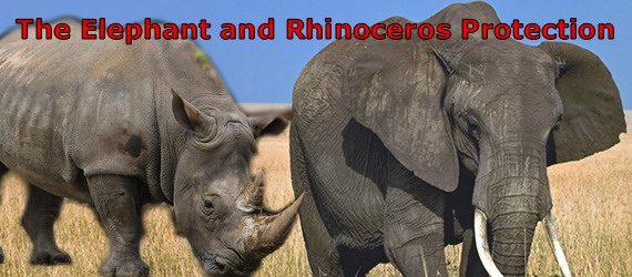 elephant_rhinoceros_image