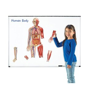 Learning Resources - Double Sided Magnetic Human Body - 17 Piece S...