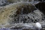 Tom D Welsh Ragged Falls Muskoka