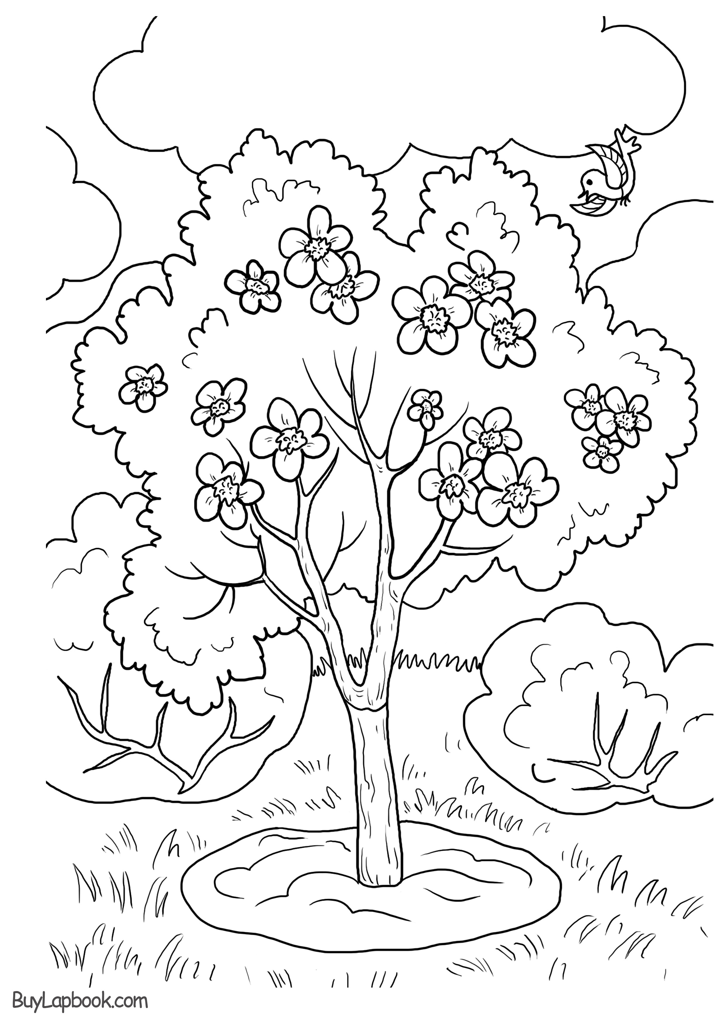 An Apple Tree Life Cycle Free Printable Resources