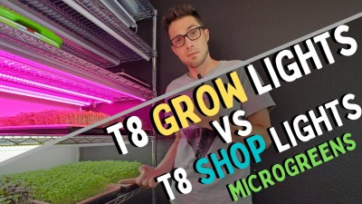 LED GROW LIGHTS vs GARAGE LIGHTS – Microgreen Lighting – Turnip