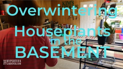 Basement Plant Set Up – Overwintering Houseplants in Basement – Grow Lights for Houseplants