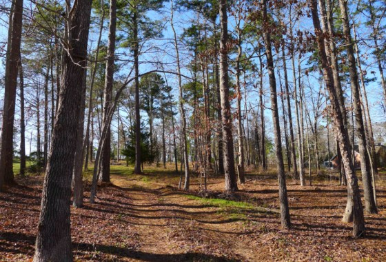 31.6 Acre Lot Palestine Tx 75801 - Land for Sale #14 & ACR 363