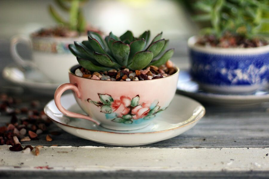 A close up shot of a succulent plant in a pink floral tea cup on a saucer