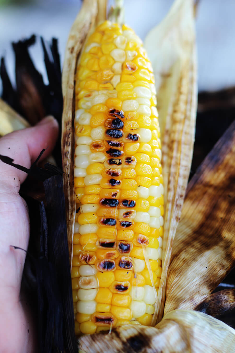 a picture of a golden ear of corn that has been grilled in the husk, with the burnt husk peeled back to expose the kernels