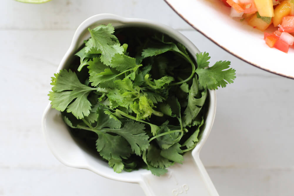 a cup of fresh cilantro leaves