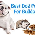 Beabull Puppies For Sale – Choose the Right Beabull Puppy