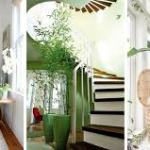 Best Trees for Indoors