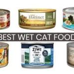 Cat Food: The Best Cat Food of 2018