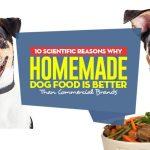 Dog Food: Understanding Commercial Dog Food
