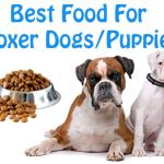 6 Factors: How to Choose Dog Food According to Science