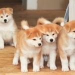 3世紀頃、邪馬台国の候補地である纒向遺跡(まきむく遺跡)で卑弥呼が犬を可愛がっていた可能性にワクワク。日本人と犬との深い絆の物語。
