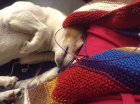 Max knitting on the couch.