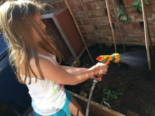 Buzymum - watering the newly planted seeds and plants