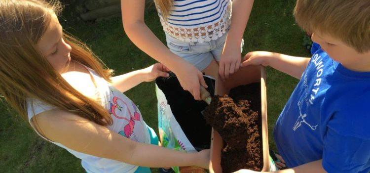 Step by Step Guide to Growing Veg With Kids