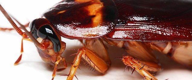Sinekler yemeğinize mikrop bulaştırmak konusunda hamamböceklerini solda sıfır bırakıyor
