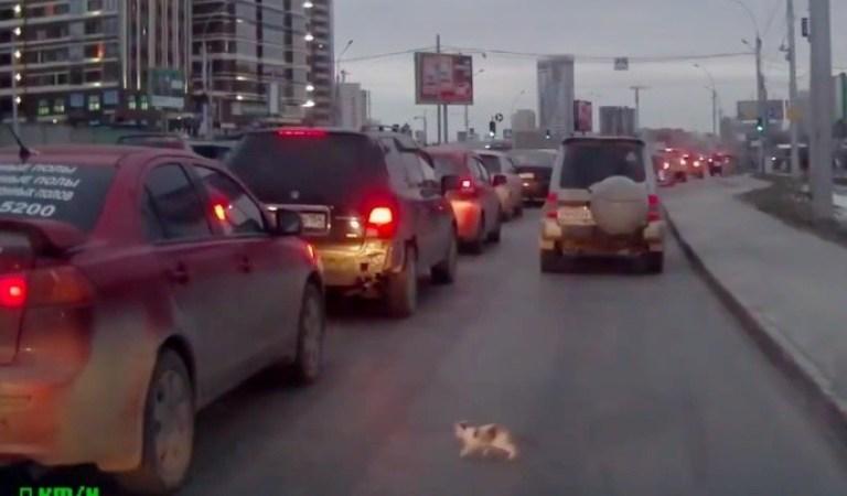 Yoğun Trafiğin İçinde Yavru Kediyi Ezilmekten Son Anda Kurtaran Cengaver Adam