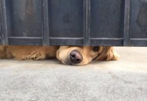 Her Gün Aynı Yerde Kendisini Sevdirmeyi Bekleyen Köpeğin Tatlış Hikayesi