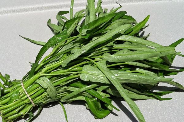 Su ispanagi yabani sebze