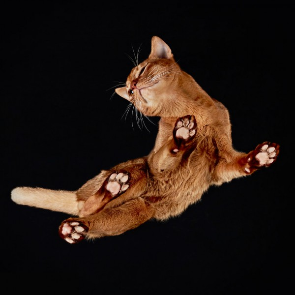25-photos-of-cats-taken-from-underneath-14__880
