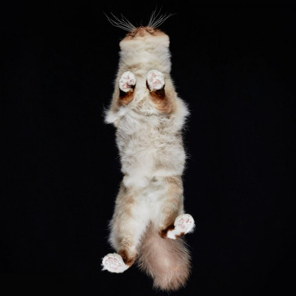 25-photos-of-cats-taken-from-underneath-15__880