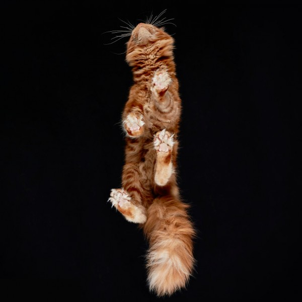 25-photos-of-cats-taken-from-underneath-19__880