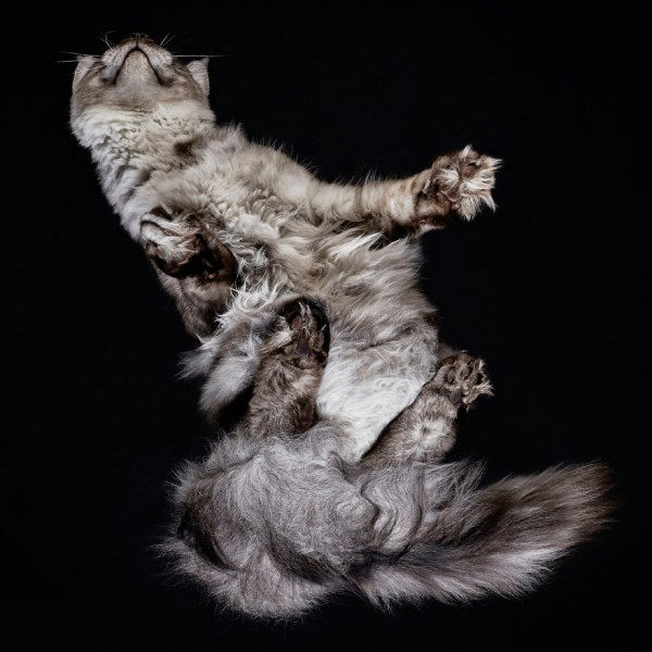 25-photos-of-cats-taken-from-underneath-20__880